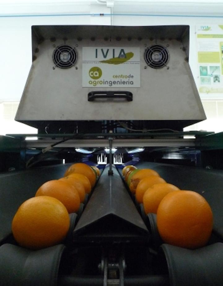 Machine-vision-based inspector sorts oranges