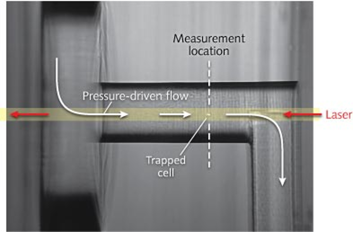 In an optical chromatography setup, cells are placed in a flowing fluid (left to right) and remain stationary when the optical force from a laser (right to left) balances the fluid flow