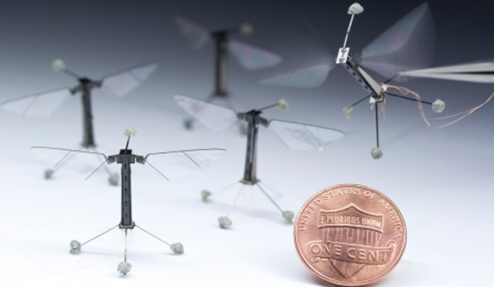 Robot insects may someday be used in agriculture and disaster relief situations. (Image credit: Microrobotics Lab, Harvard John A. Paulson School of Engineering and Applied Sciences and the Wyss Institute for Biologically Inspired Engineering, SUNY UB)