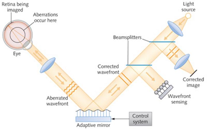 PHOTONIC FRONTIERS: BIOPHOTONICS: Adaptive optics examines