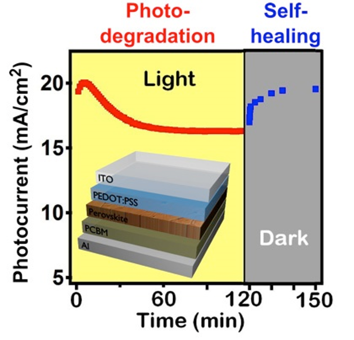 A diagram shows photo-degradation under sunlight and self-healing in the dark of the photocurrent in organometallic halide perovskite solar cells. (Image credit: LANL)