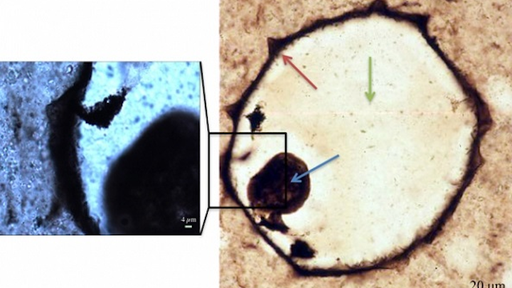 Raman mapping was carried out on a protest fossil from silicified coastal carbonates at low magnification over the full fossil (right), and at high magnification (left). Cell walls, collapsed cell contents, and quartz infilling cement are indicated by the red, blue, and green arrows, respectively. Such a technique can be duplicated on Martian rocks to better search for signs of life. (Image credit: MIT)