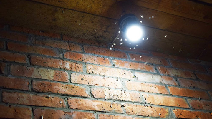 Researchers have shown that LED lights attract only a tiny fraction of insects drawn to filament and fluorescent lighting options. (Image credit: University of Bristol)
