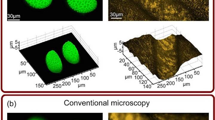 Single-snapshot images of lily flower pollen grains (left) and an irregular brass surface (right) are obtained using the computational complementary kernel matching (CKM) technique (a) and conventional microscopy (b). Both CKM images exceed the depth of field (DOF) of a conventional microscope. (Image credit: University of Glasgow)