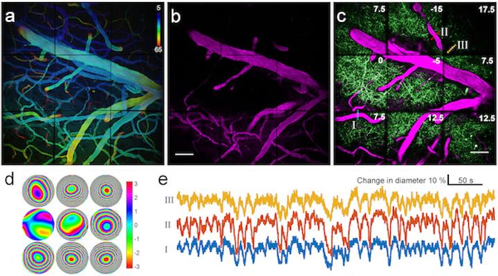 Adaptive-optical brain-imaging system uses multi-pupil prism arrays