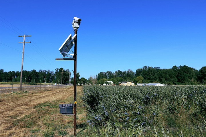 Bird Control Group focuses on using lasers to divert flying pests from valuable crops like blueberries. (Image credit: Bird Control Group)