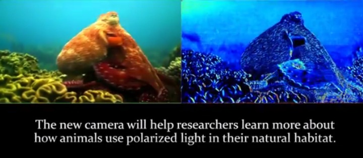 Still from a video of the underwater camera in action shows the normal image (left) and mantis-shrimp-eye camera image (right). (Image credit: University of Illinois)