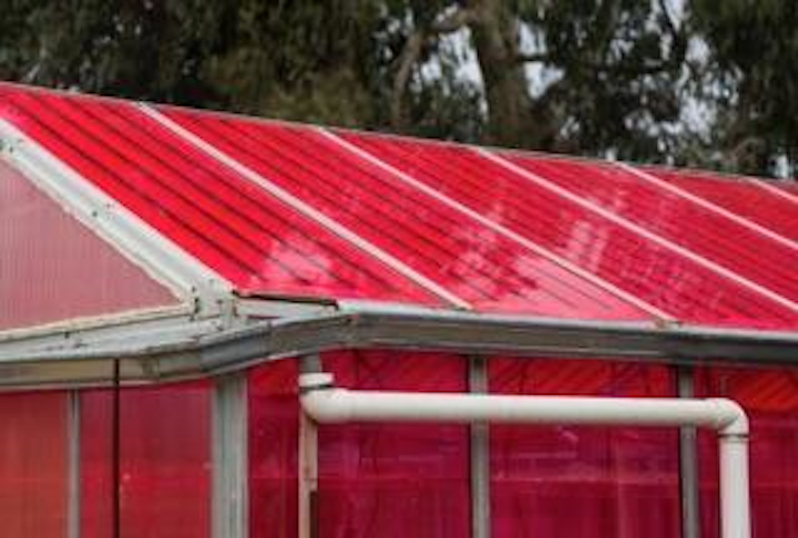 Adding luminescent solar concentrators atop greenhouses doesn't hurt plant growth (and sometimes helps)