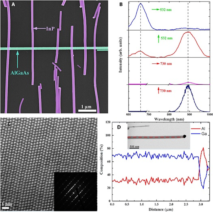 A false-color SEM image shows (a) the InP and AlGaAs nanowire networks. Spectra of the nanowires at a single exemplary measurement spot (b) characterize the HRSTEM image of InP nanowires (c). The shows the diffraction pattern demonstrating the ZB crystal structure and the formation of frequent twin planes along the nanowire growth axis, and EDX measurement results (d) show the Al and Ga composition along the nanowire growth direction. (Image credit: Aalto University)