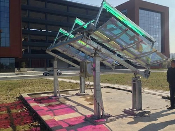 A new type of concentrating solar panel still harvests solar energy for electricity generation, but lets red and blue light go through to illuminate crops growing underneath, without sacrificing growth performance. (Image credit: IAT)