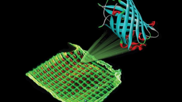 Luminescent proteins provide color for ecological and cheap biodisplays