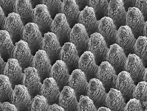 Shown is a laser-machined metal surface with self-cleaning properties. The peak-to-peak distance between the individual structural elements is approximately 10 microns. (Image credit: LAMpAS project)