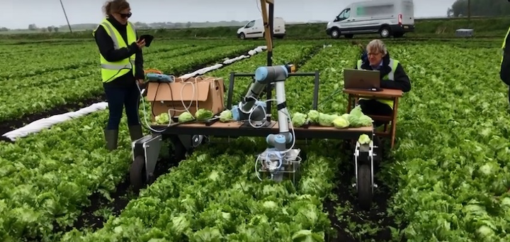 Machine vision can be used to harvest lettuce at the peak of ripeness and make multiple passes over a field, maximizing crop yield. Lettuce is currently picked by hand and the field is passed only once, leaving much of the product behind.
